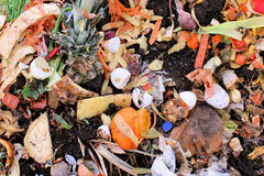 Compost Stock Images