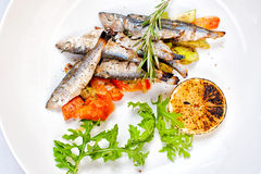 Vegetables En Mirepoix with Grilled Herring Royalty Free Stock Photos
