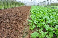 Vegetables  Farm Royalty Free Stock Photos