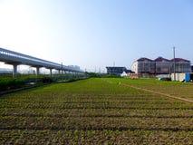 A vegetables farm Stock Photos