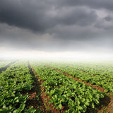 Vegetables fields and rainclouds Royalty Free Stock Photography