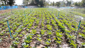 Vegetables fields in spring time . stock video footage