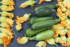 Vegetables and flowers of zucchini, located on a dark background stock photos