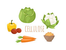 Vegetables food cellulose vector set. Cabbage, peppers, tomatoes, carrots, porridge cellulose isolated on white background. Healthy food cellulose concept Stock Photo