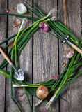 Vegetables frame Stock Photography