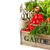 Vegetables. Fresh organic kitchen garden vegetables on vintage wooden box on a white close-up Stock Photography