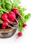 Vegetables fresh radish in wooden bucket. On white background Royalty Free Stock Photos