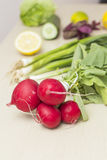 Vegetables. Fresh radishes and other vegetables Stock Photos