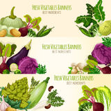 Vegetables and fresh veggies vector banners set Stock Photography