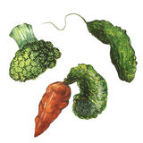 Vegetables. Fresh vegetables watercolor. Carrots, broccoli and cucumber Royalty Free Stock Image