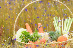 Vegetables and fruit in basket Stock Photography
