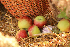 Vegetables and fruits in a basket. Ripe fruits and vegetables in a basket a clear day Royalty Free Stock Image