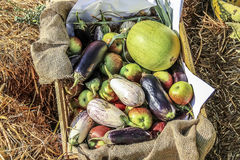 Vegetables and fruits in a basket. Ripe fruits and vegetables in a basket a clear day Royalty Free Stock Photos