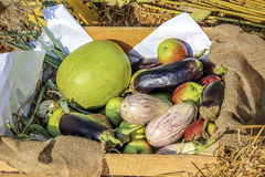 Vegetables and fruits in a basket. Ripe fruits and vegetables in a basket a clear day Royalty Free Stock Images