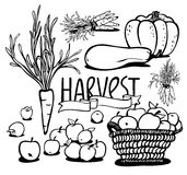 Vegetable and fruits. Harvest of vegetables and fruits. black and white. jpg include  path. eps8 Stock Photo