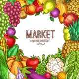 Vector natural vegetables and fruits sketch poster Royalty Free Stock Photo