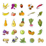 Vegetables and fruits vector illustration