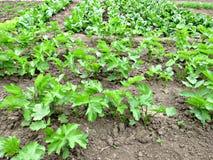 Vegetables Garden Stock Photos