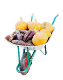 Vegetables in the garden cart. Stock Images