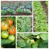 Vegetables garden collage Stock Photo