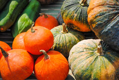 Vegetables from the garden in the countryside. Royalty Free Stock Image
