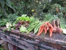 Vegetables - Garden - Gardening - organic food Royalty Free Stock Image