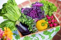 Vegetables, Garden, Harvest Stock Images