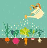 Vegetables garden watering Royalty Free Stock Images
