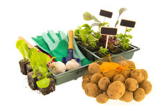 Vegetables for gardening Royalty Free Stock Image