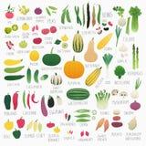 Food Vol.2: Vegetables Stock Image