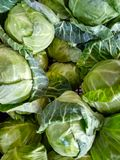 Vegetables few green fresh cabbages in the market stock image