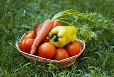 Vegetables on green grass