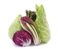 Vegetables group isolated. Chicory asparagus radicchio end salade isolated on white Royalty Free Stock Images