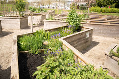 Vegetables grow in raised beds. In a community garden Stock Photo