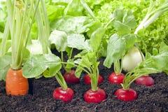 Vegetables growing in the garden stock images