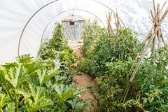 Vegetables growing in a green garden Stock Photos