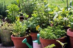 Vegetables growing in pots Stock Photos