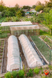 Vegetables Growing In Raised Beds In Vegetable Garden. And Hothouses. Summer Season Royalty Free Stock Photos