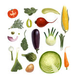 Vegetables. Hand-drawn vegetables,  on white background Royalty Free Stock Images