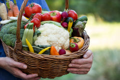 Vegetables in hands Royalty Free Stock Image