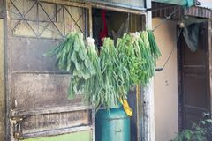Vegetables hanging line outside back door of Asian city restaura Royalty Free Stock Images