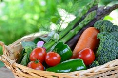 Vegetables harvested in basket Royalty Free Stock Photos