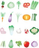 Various Vegetables from Tropical farm - Vector Illustration vector illustration