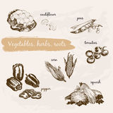 Vegetables, herb and roots Stock Photos