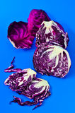 Red cabbage on a blue background. Stock Photos