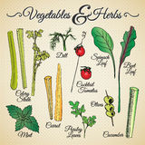 Vegetables and herbs royalty free stock photo