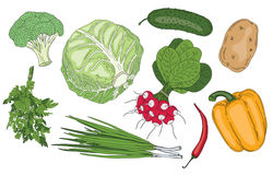 Vegetables and herbs fresh spring green organic vector collection Stock Photo
