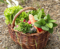 Vegetables and Herbs Freshly Picked From the Garden Royalty Free Stock Photos