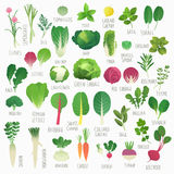 Food Vol.1: Vegetables and Herbs Stock Images