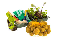 Vegetables and herbs for vegetable garden Royalty Free Stock Image